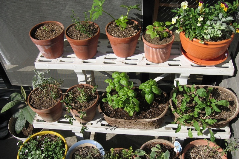 棚に並んだ鉢植え