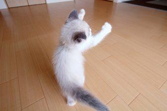 """バレエや見事な腰ふりも? 決定的瞬間をとらえた""""踊る猫""""の姿に釘付け!"""