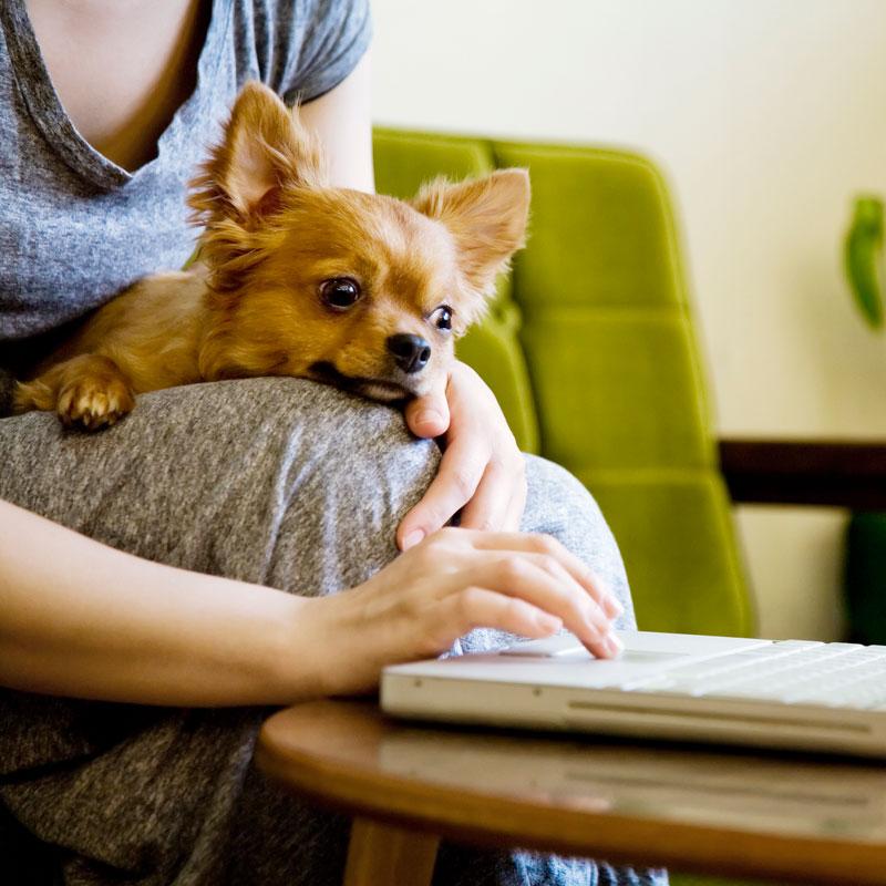 飼い主のひざの上にのる子犬