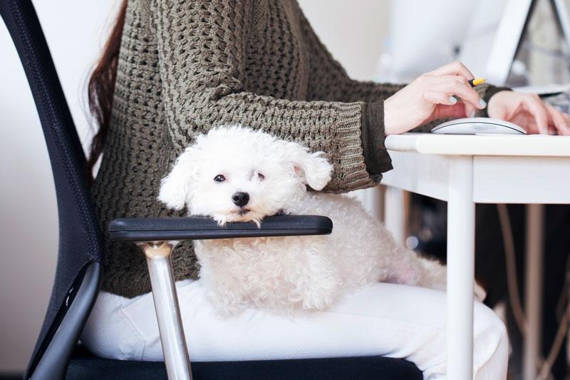 リモートする飼い主の横に座る犬