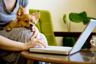 """飼い主の""""ステイホーム""""が続くのは犬や猫にはストレス?ペットが出すサインに注意を"""