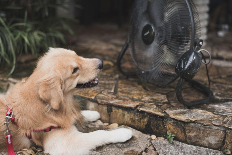 涼んでいる犬