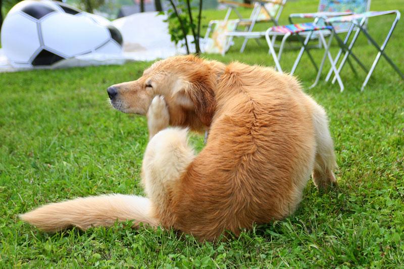 毛をかく犬