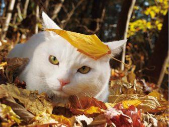 """世界各地の""""ボス猫""""に熱視線 ふてぶてしくて威圧的…だけどそこが可愛い!"""