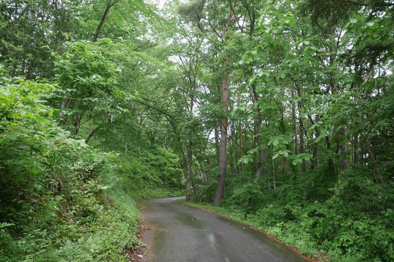 「カミツレの宿 八寿恵荘」周辺の森