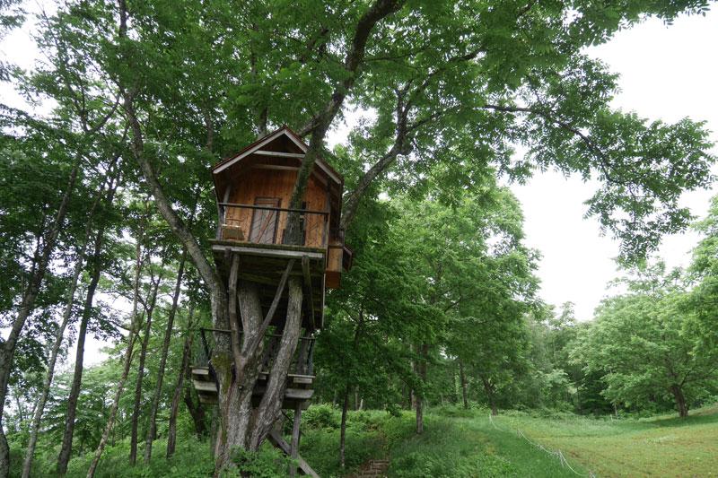 カミツレ畑のツリーハウス