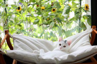 気取らない日常風景を収めた「猫と花」の写真がとっても華やか!
