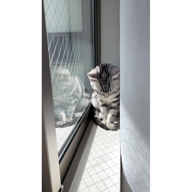 何かとたたかう猫
