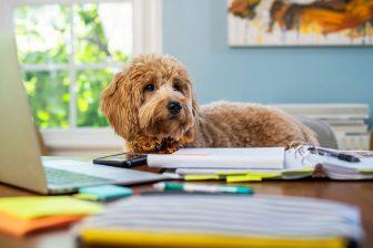 愛犬のしつけは「無視」がコツ|悪いことしたら言葉で言わず、徹底的にスルー