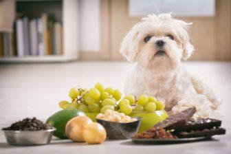 チョコ、ナッツ、生肉、生魚、パン…犬や猫に「与えてはいけない」食べ物