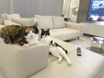 """ボロアパート住まいだった""""猫マスター""""が愛猫のために新築の豪邸を建てるまで"""