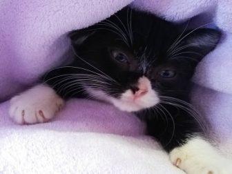 ファンからは「ギズモみたい」の声 SNSで話題の保護猫「もんた」とは?