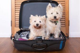 旅行時のペットの預け先どうする?「猫は自宅、犬はホテル」がおすすめの理由