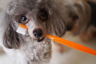 虫歯になりにくい犬や猫。それでも毎日の「歯磨き」が欠かせない理由とは?