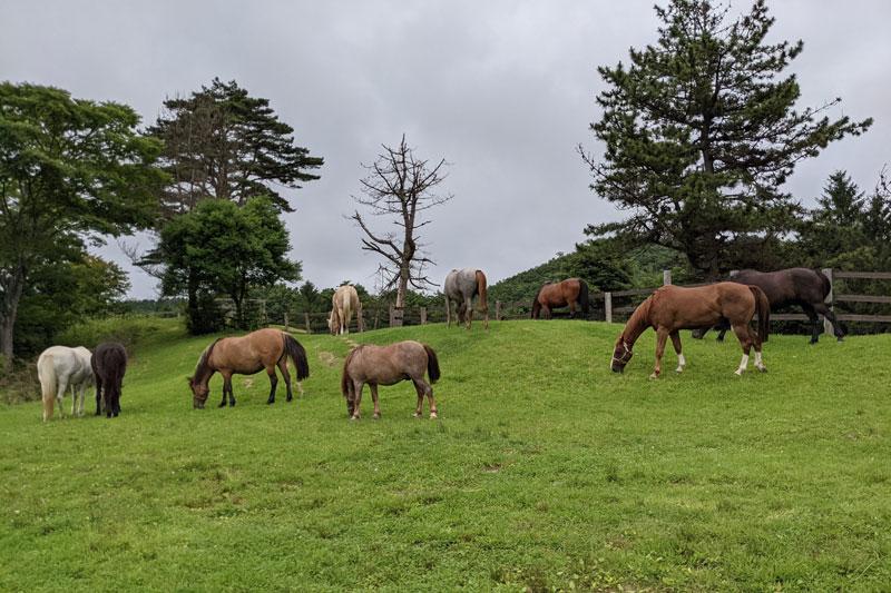 ヘルスリゾート 天空の庭 天馬夢の馬