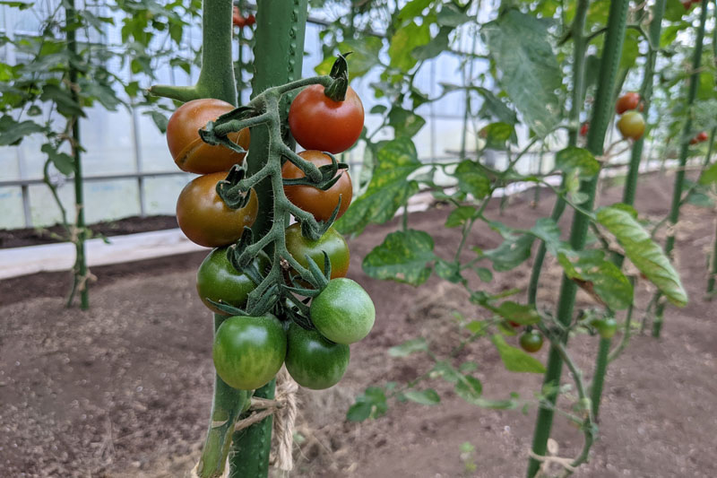 星野リゾート リゾナーレ那須の農業体験